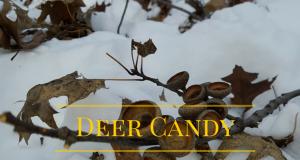 Deer Candy (1)